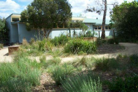 Bells St Primary School indigenous garden in 2005
