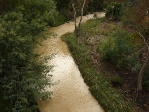 Muddy Merri upstream from Blyth St bridge