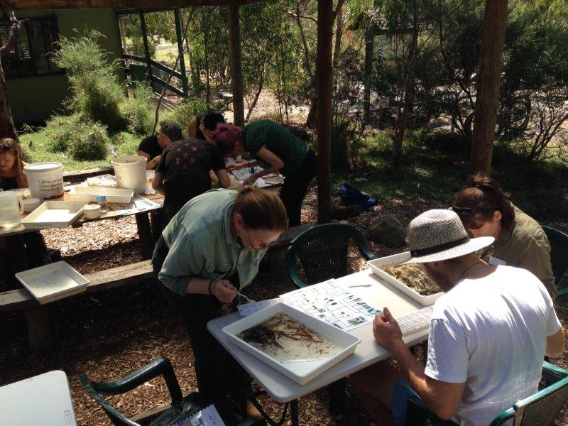 Participants identifying waterbugs at the waterbug census