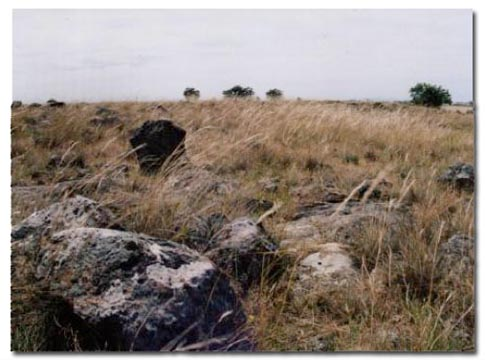 Craigieburn Grasslands in Late Summer