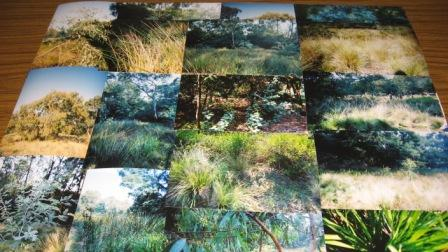 Photos taken by students of their natural surrounds