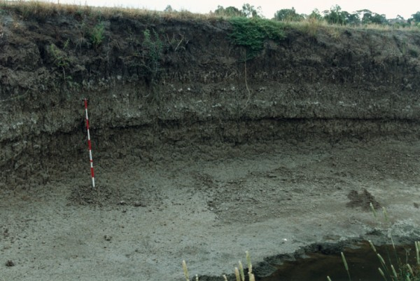 Bedded alluvium at Edgars Creek near Outlook Drive, Coburg, Victoria, Australia