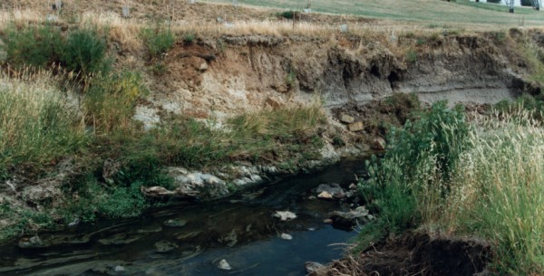 Eroding alluvium at Lower Edgars Creek, North Coburg, Victoria, Australia