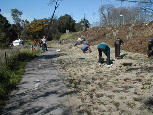 Planting and BBQ day near Rushall Station, North Fitzroy