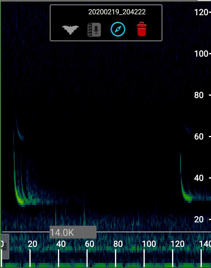 Bat detector spectogram
