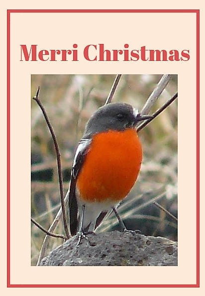 Flame Robin Merri Christmas card 2018
