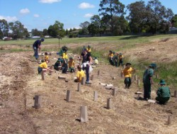 First planting along Wallan Creek with Wallan Primary School in November 2003
