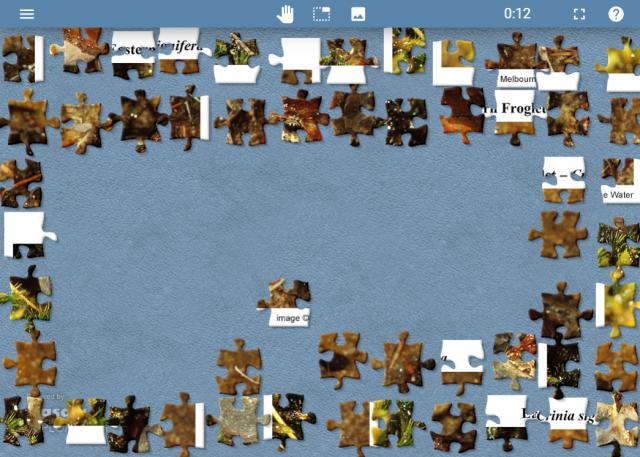 frog jigsaw 2