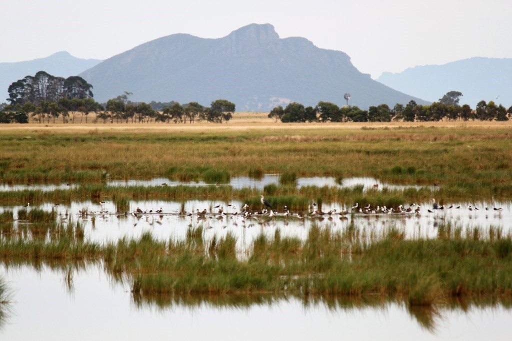 Scale Swamp Dunkeld Vic