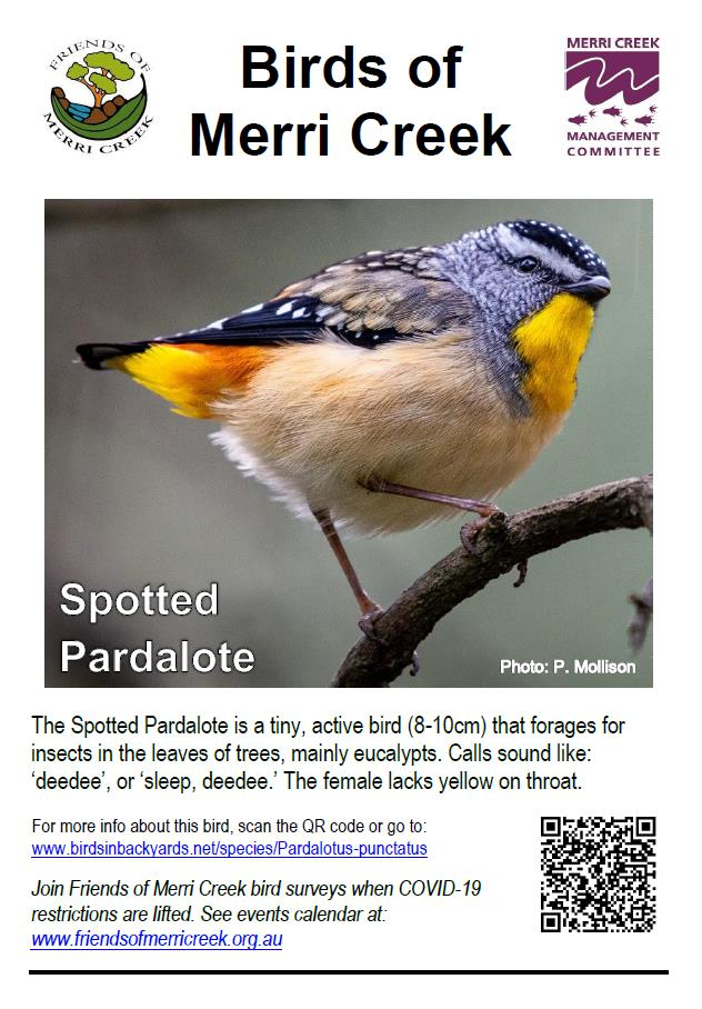 Spotted Pardalote poster