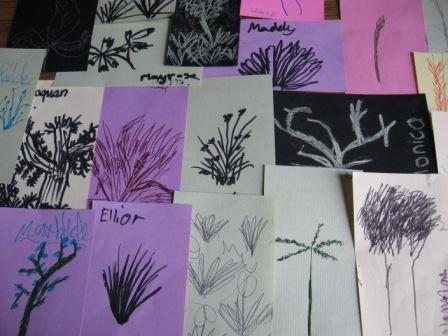 Sketches of plants students observed in the field