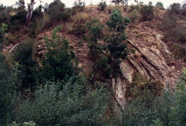 Cliff of Melbourne Formation at Kendall Street Preston, Victoria, Australia