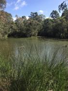 Strettle wetland 11 4 21